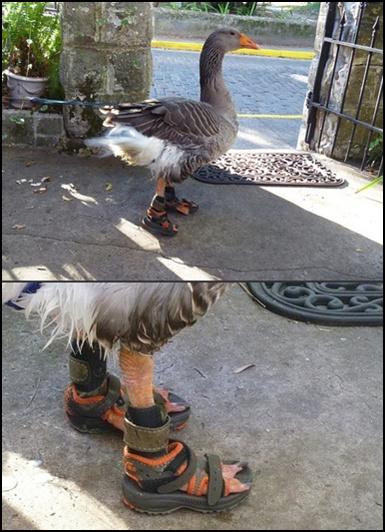 goose (385x532, 122Kb)