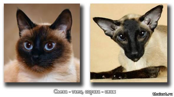 Разница кошек и котов