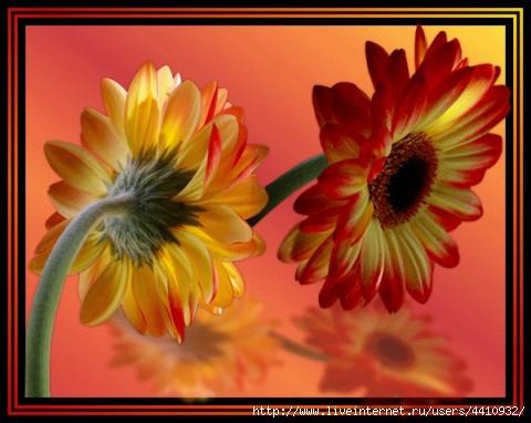 цветок (480x382, 103Kb)