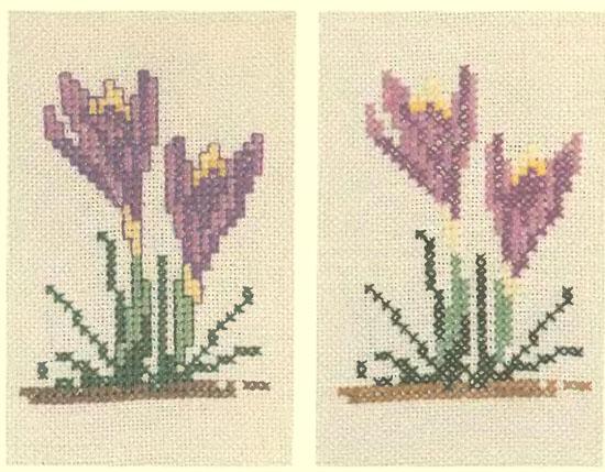 Рис.6 Лиловый крокус