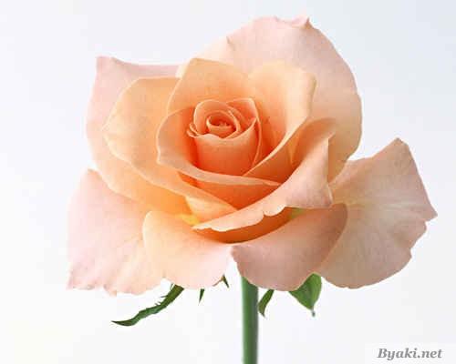Женская энергия персикового цвета
