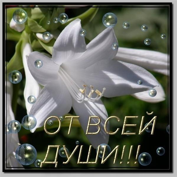 http://img1.liveinternet.ru/images/attach/c/3/76/219/76219415___65533.jpg
