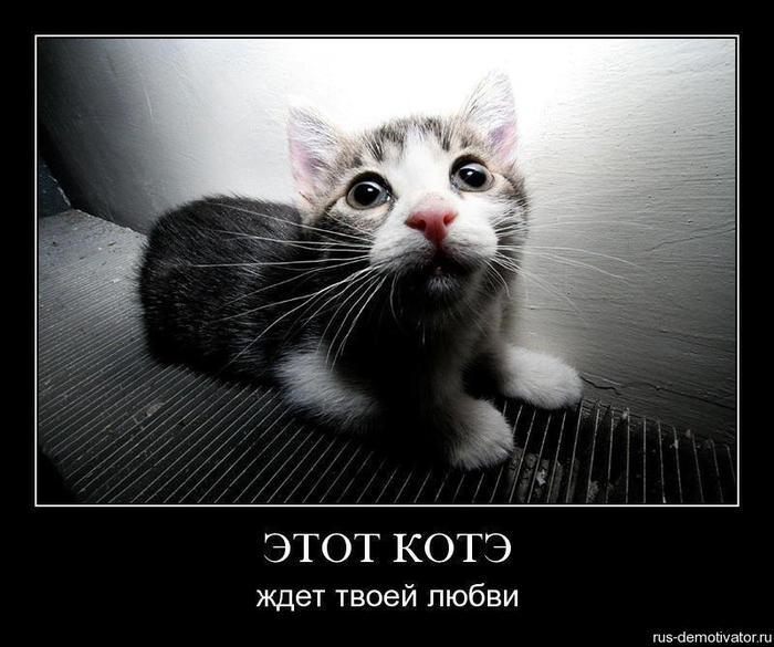 1261074792_si1o258elilb (700x585, 56Kb)