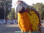 Превью большая птица (600x450, 61Kb)