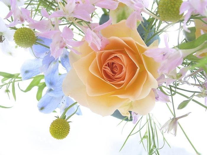 flowers (700x525, 91Kb)
