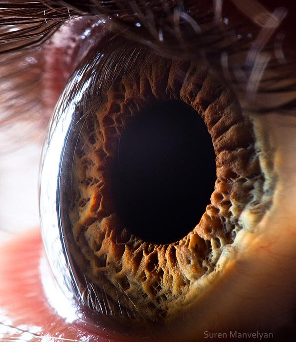 eye-macro-photo-15 (605x700, 71Kb)