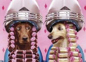 Салон для собак (300x217, 25Kb)