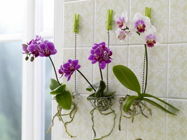 Горшки для орхидей своими руками 80