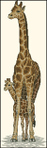 Превью Dimensions_13665_Giraffe Mother and Baby (200x628, 101Kb)