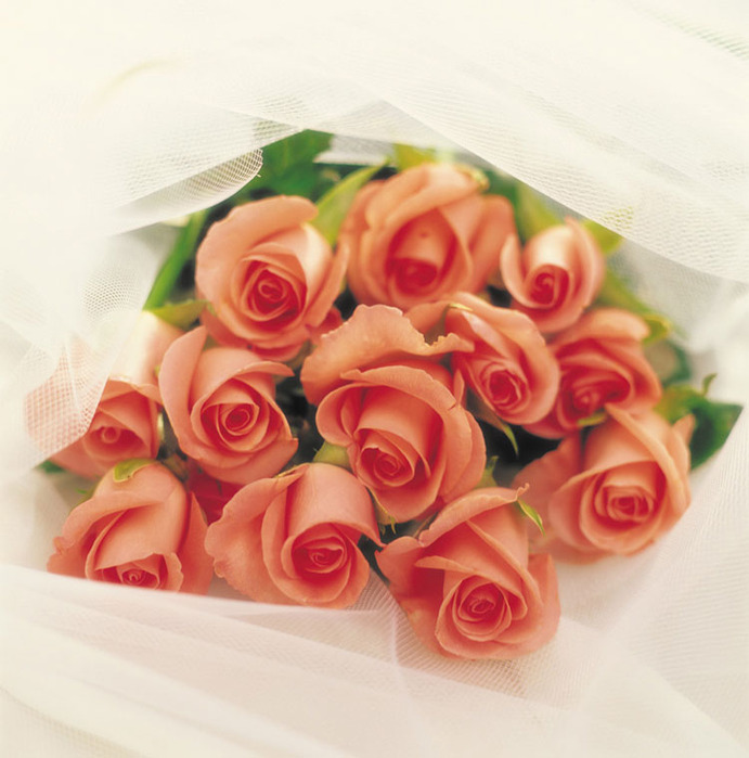 кремовые розы (691x700, 114Kb)