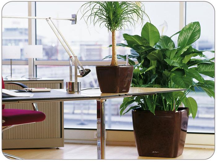 Декоративные растения для дома