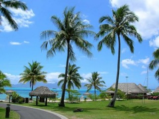 пальмовые дома (320x240, 27Kb)