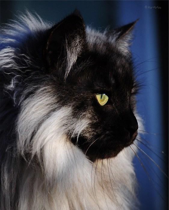 Черные кошки в чернойкомнате приметы