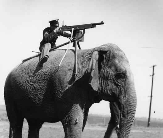 слонопотам отакуэ (528x448, 40Kb)