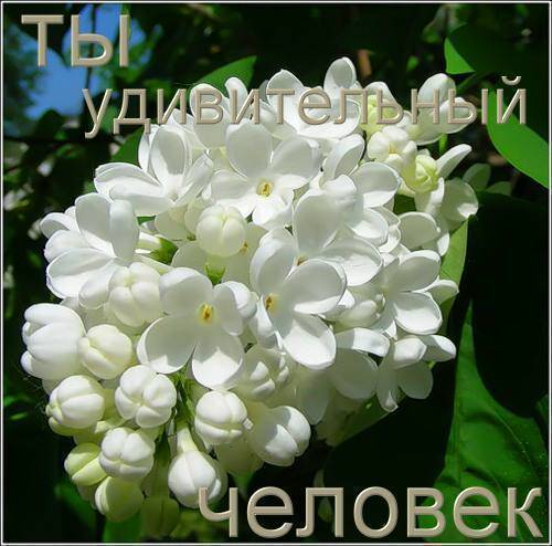 0_82aa_2937df22_L (500x494, 40Kb)