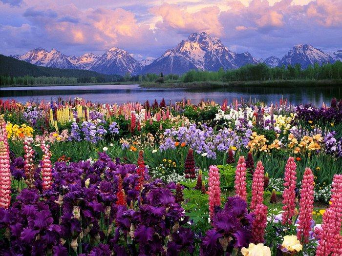 56115240_1267945963_rocks_lake_and_flowers1024 (700x525, 134Kb)
