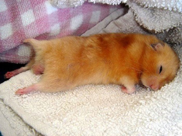 3180456_funny_sleeping_animals_04 (700x525, 64Kb)