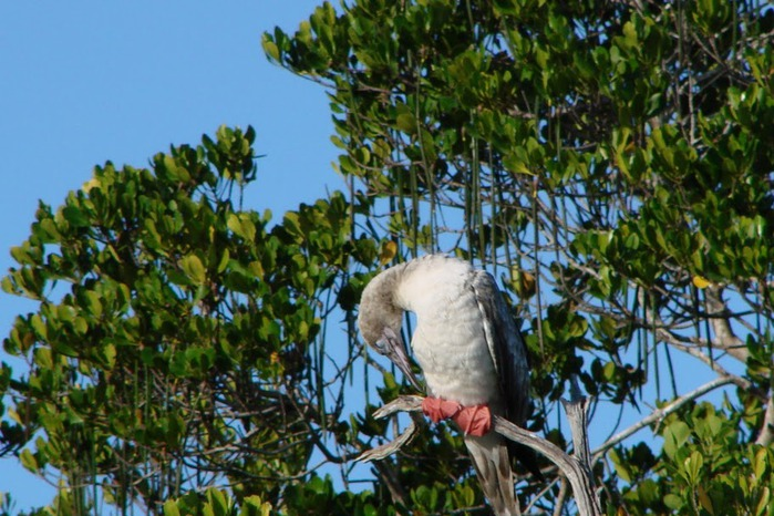 Атолл Альдабра — чудо природы 64338