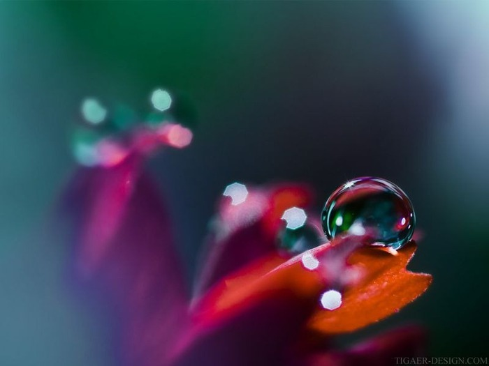 Макро фото - природа, капли, насекомые 3