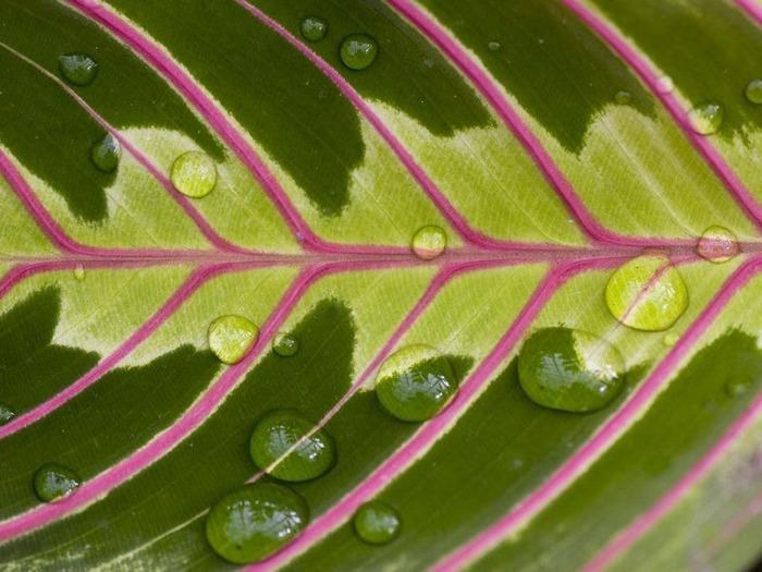 Макро фото - природа, капли, насекомые 8