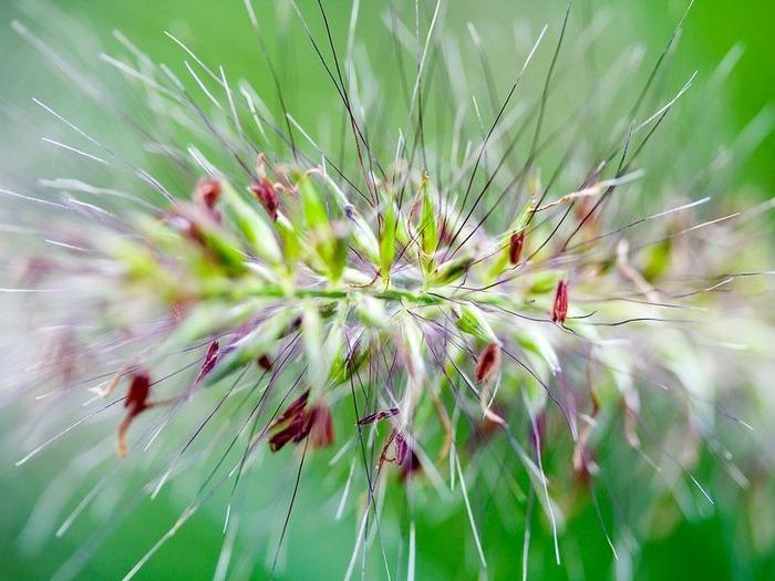 Макро фото - природа, капли, насекомые 9