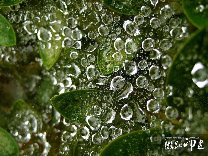 Макро фото - природа, капли, насекомые 47