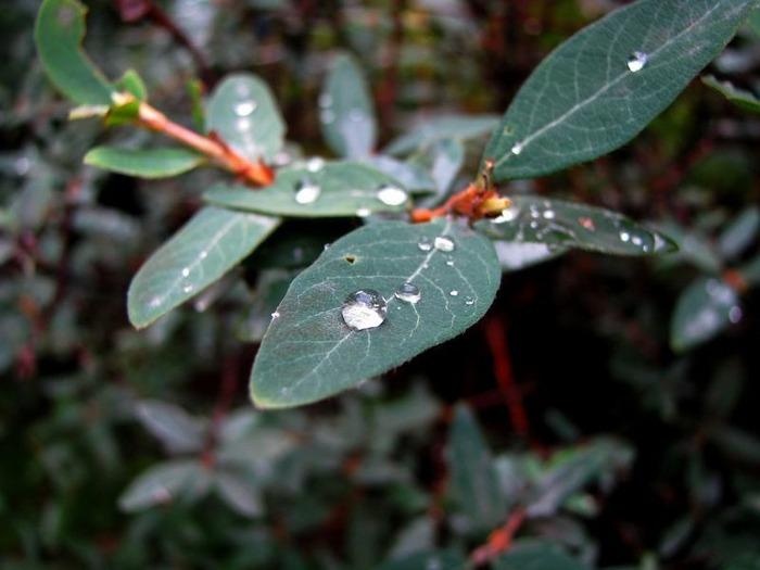 Макро фото - природа, капли, насекомые 52