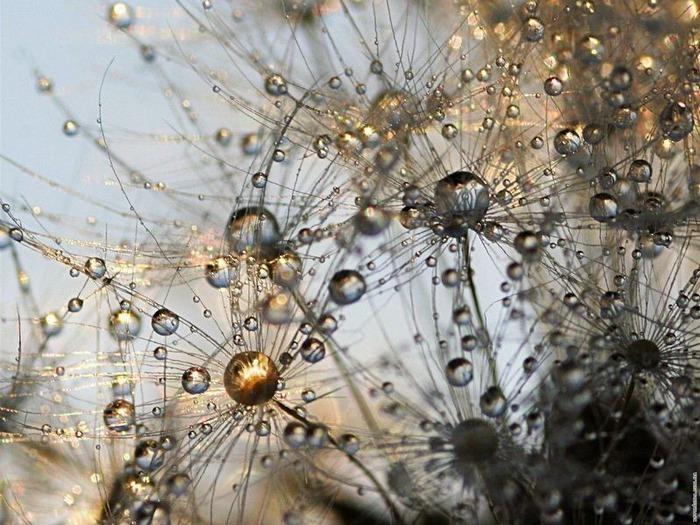 Макро фото - природа, капли, насекомые 63