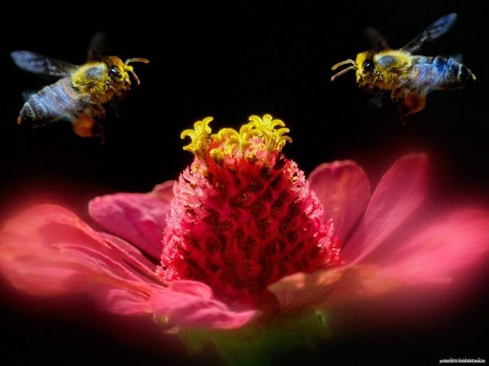 Макро фото - природа, капли, насекомые 66