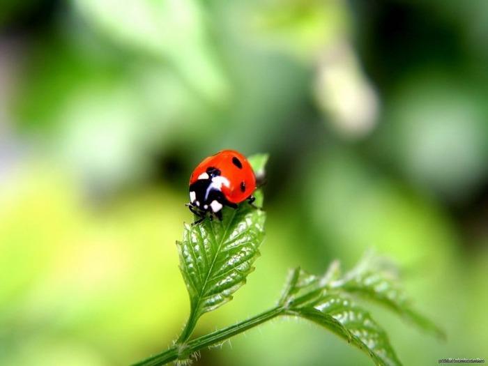 Макро фото - природа, капли, насекомые 68
