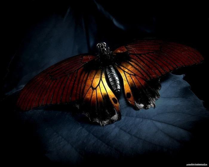 Макро фото - природа, капли, насекомые 70