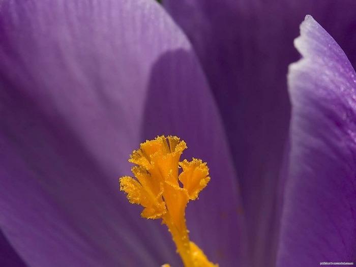 Макро фото - природа, капли, насекомые 78