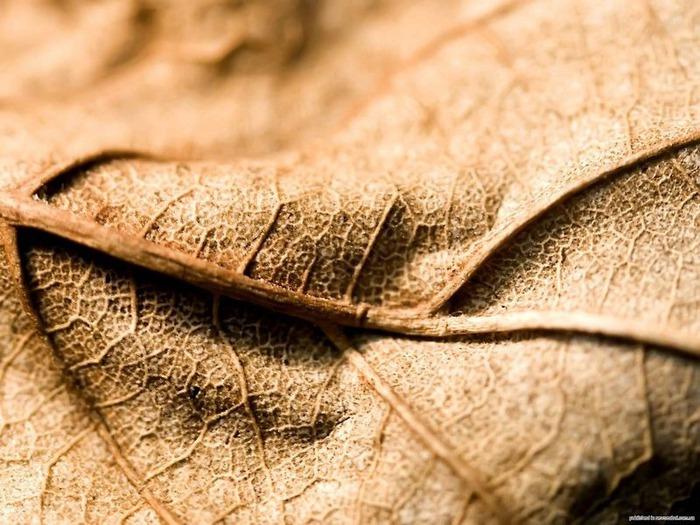 Макро фото - природа, капли, насекомые 89