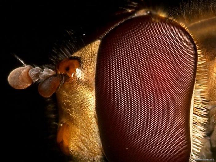 Макро фото - природа, капли, насекомые 93