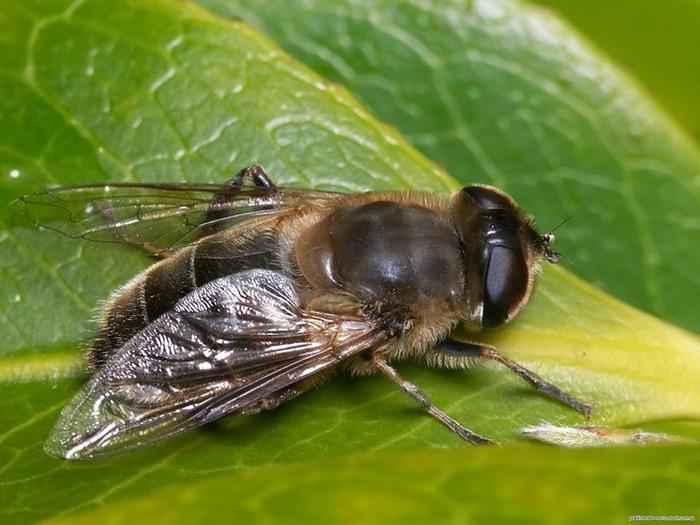 Макро фото - природа, капли, насекомые 95