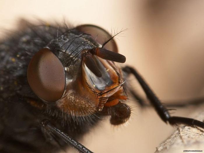 Макро фото - природа, капли, насекомые 96