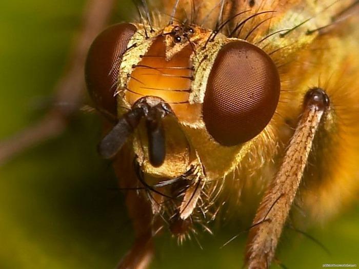 Макро фото - природа, капли, насекомые 97