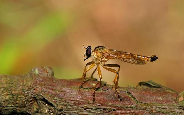 Макро фото - природа, капли, насекомые 99