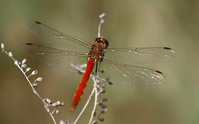 Макро фото - природа, капли, насекомые 102