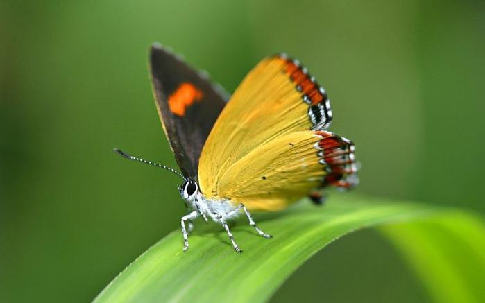 Макро фото - природа, капли, насекомые 104