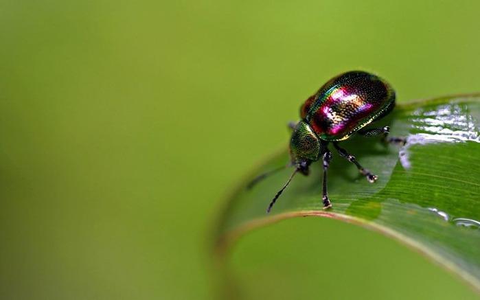 Макро фото - природа, капли, насекомые 106