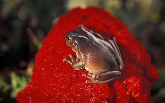 Макро фото - природа, капли, насекомые 107