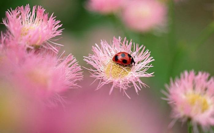 Макро фото - природа, капли, насекомые 113
