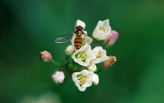 Макро фото - природа, капли, насекомые 117