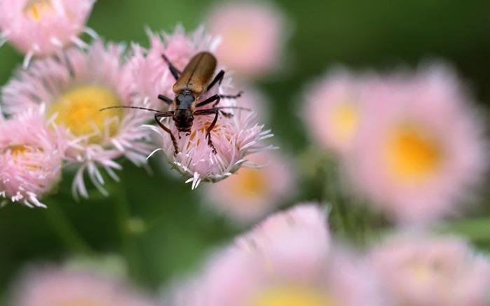 Макро фото - природа, капли, насекомые 119