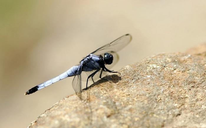 Макро фото - природа, капли, насекомые 124