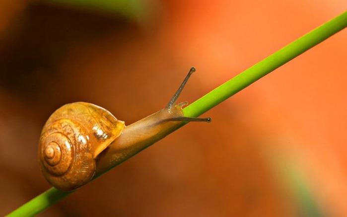 Макро фото - природа, капли, насекомые 126