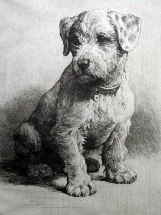 puppysealyham001 (525x700, 388Kb)