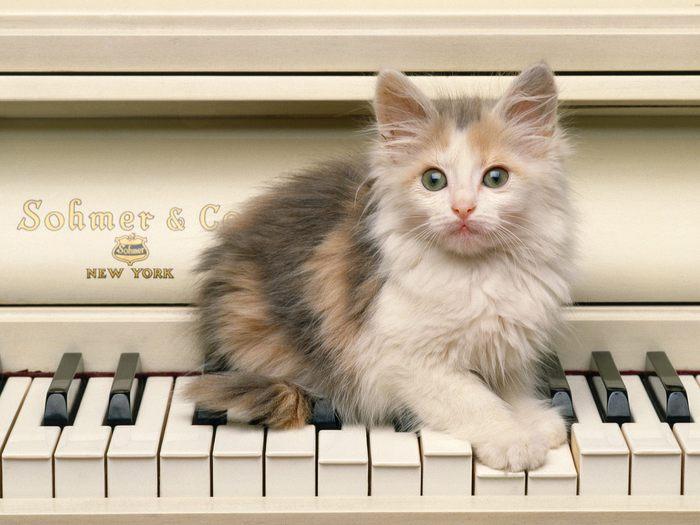 59333516_1274489987_u26_1969_kotenok_na_pianino (700x525, 55Kb)