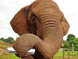 Слониха с маникюром показала номер из Книги рекордов Гиннесса